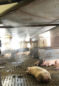 Het stalkoelingssysteem van Atec Solutions biedt verkoeling aan dieren in stallen. Voor meer info over deze en meer producten, klik hier.